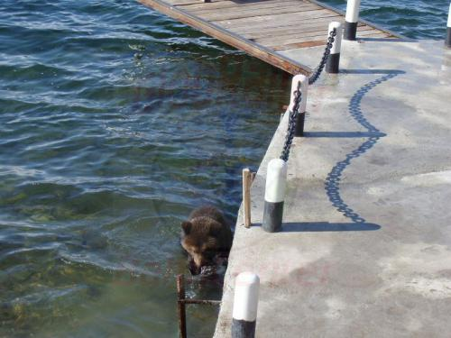 28.09.2003 - Braunbär am Bajkalsee